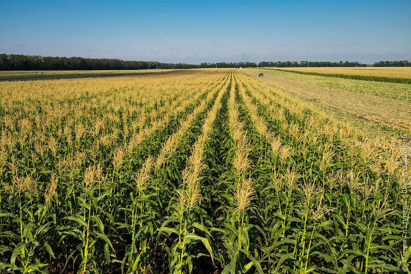 Field IQ решение для посева